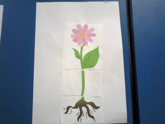 floarea fisa de lucru