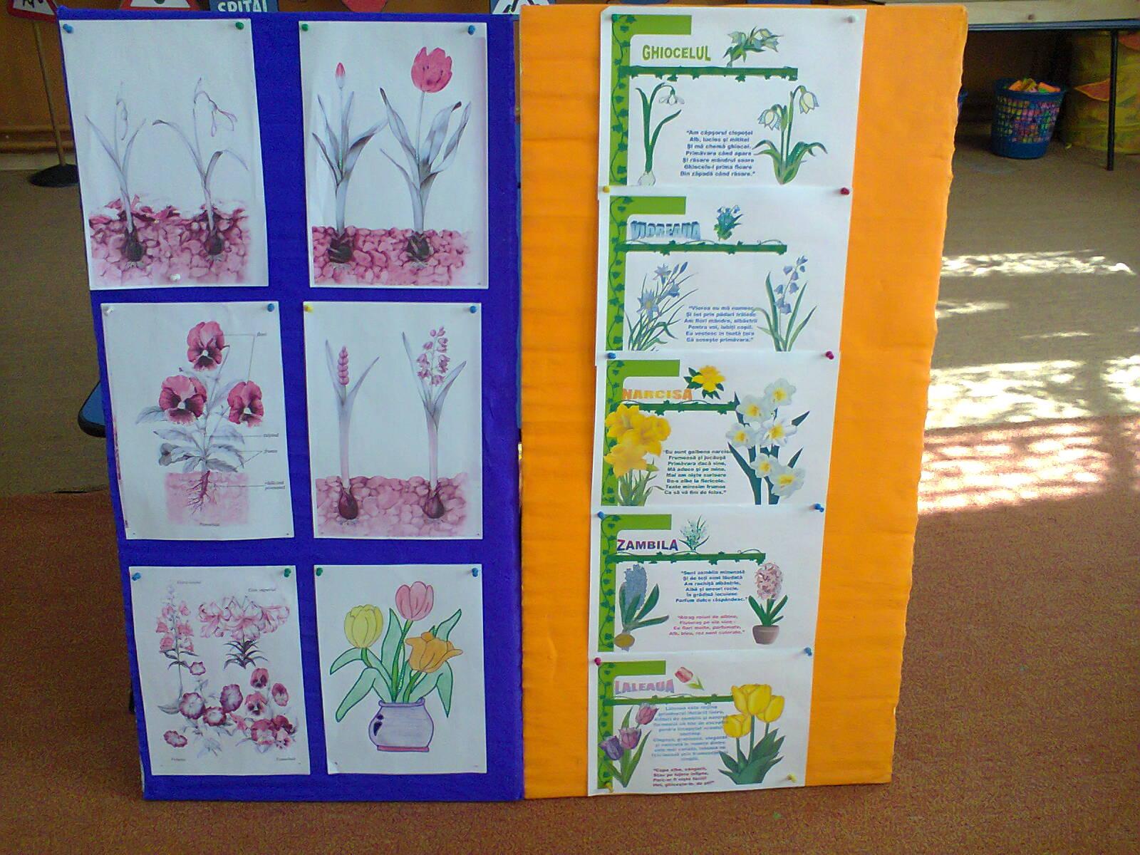 Flori De Primăvară Jurnal De Prichindei