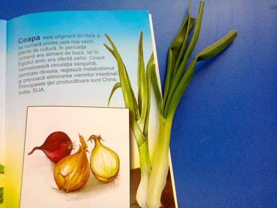 Lecția despre legume de primăvară