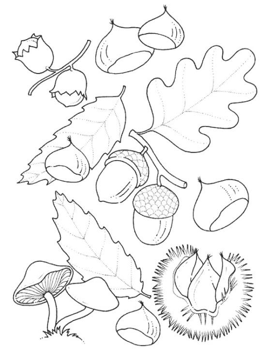 legume toamna de colorat