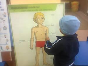 corpul uman gradinita