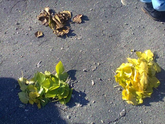 frunze gradinita